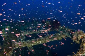 Un pez común sobre muchos pecios