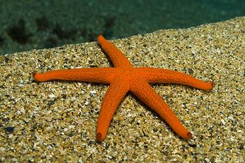 18. Estrellas de mar