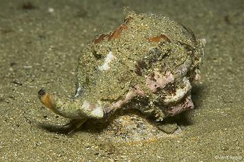 13. Moluscs - Snails