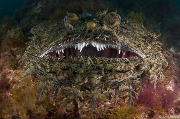 Un monton de dientes