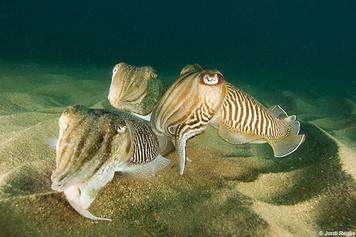 12. Molluscs