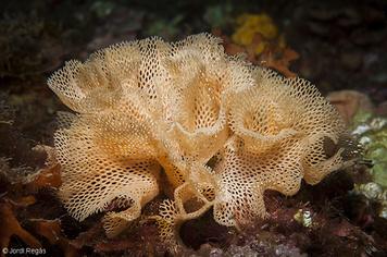 15. Bryozoans